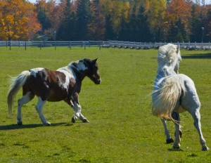 jpg no post running horse