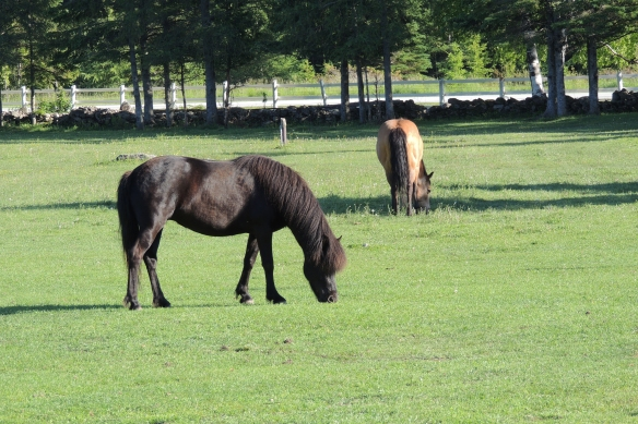 After the rain and fog - the green pasture is contentment for the horses