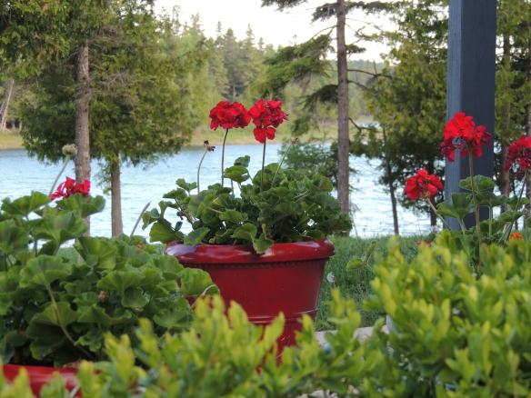 After the rain and fog - the pots overlooking the bay also look to the sun.