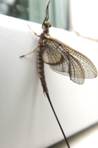 They land on the side of the house