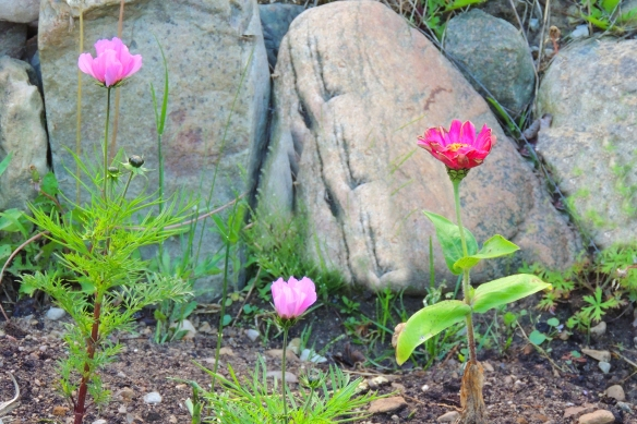After the rain and fog - the new garden flowers point their heads to the sun.