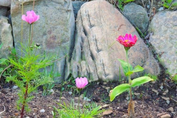 Garden flowers after digital weeding! Very organic -- no weed killer used!