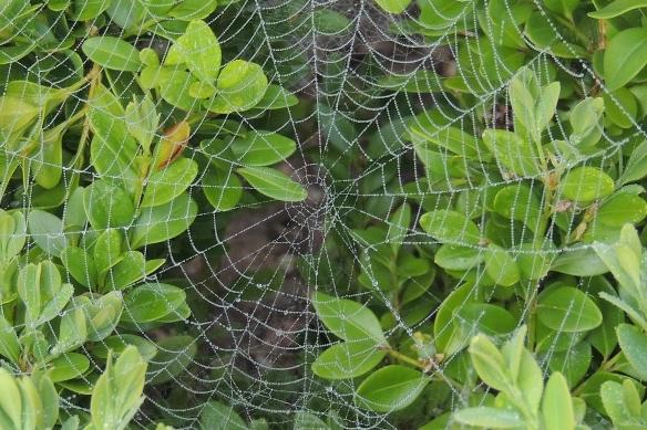 Wet web along the walk-way