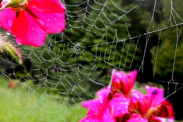 Wet web in my garden