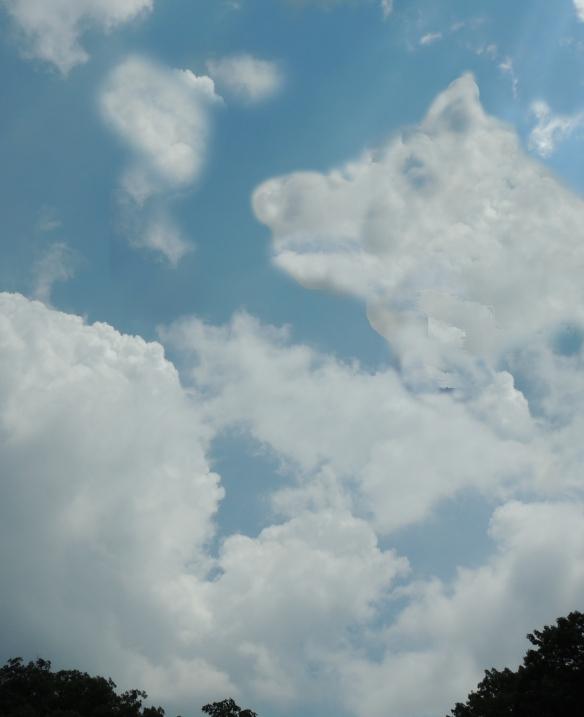 White Fang the cloud dog