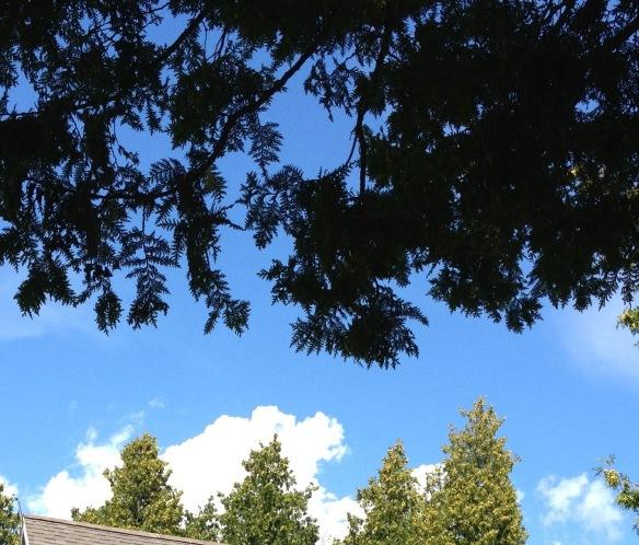 Dog in the sky