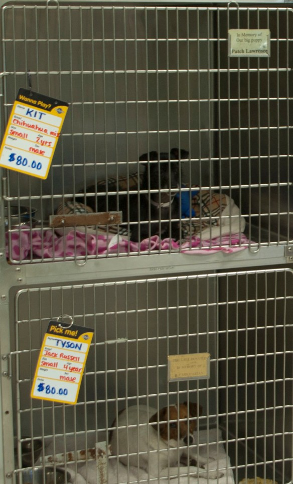 Speaking of dogs -- Here is a dog for sale sign at the SPCA - $80 bucks for KIT - not KITTEN