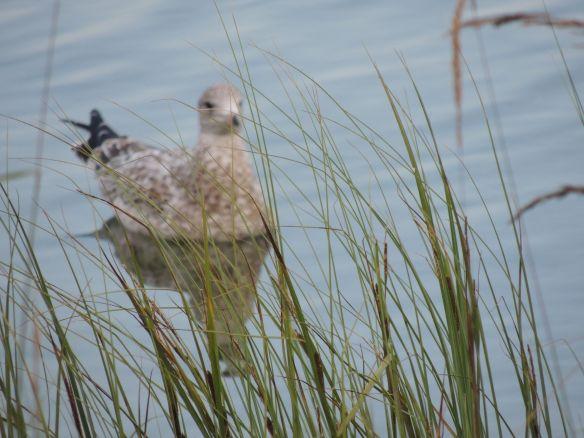 Then, I saw a Gull - I like Gulls - Do you?