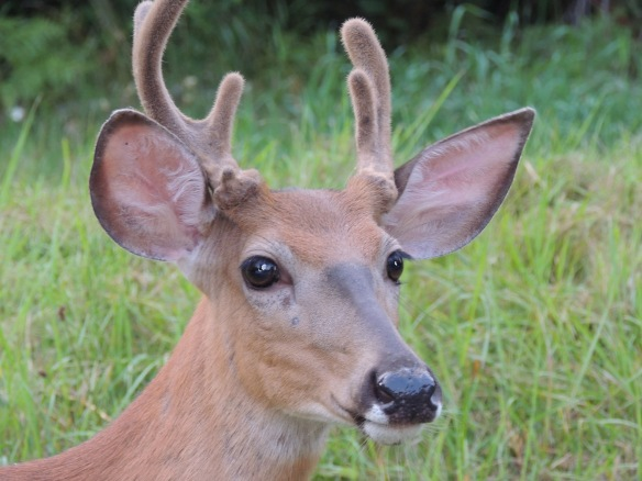 Third, I saw this cute deer