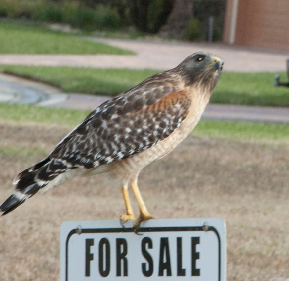 Misleading sign - Hawk is not for sale