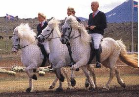 Perla is an Icelandic - I love Icelandic Horses - Reading about them, riding them, watching  outhers ride them -- somehow make me smile. Are they not classy. So long for now - I must get ready to ride.
