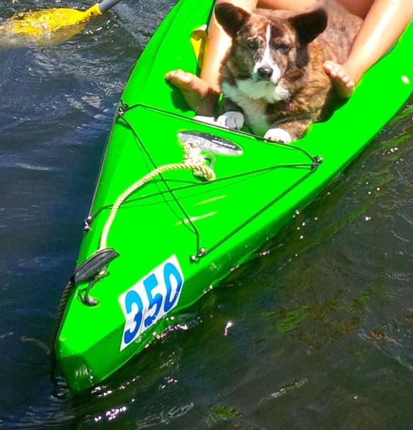 kayak dog