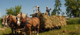 My first haying job - driving the team to load hay -- We only had a team of 2 horses - Dan and Mable