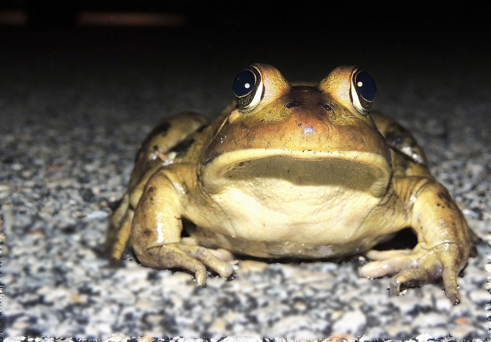 Home again - Dinner over -- and I found this guy by the driveway. Think he looks neat.