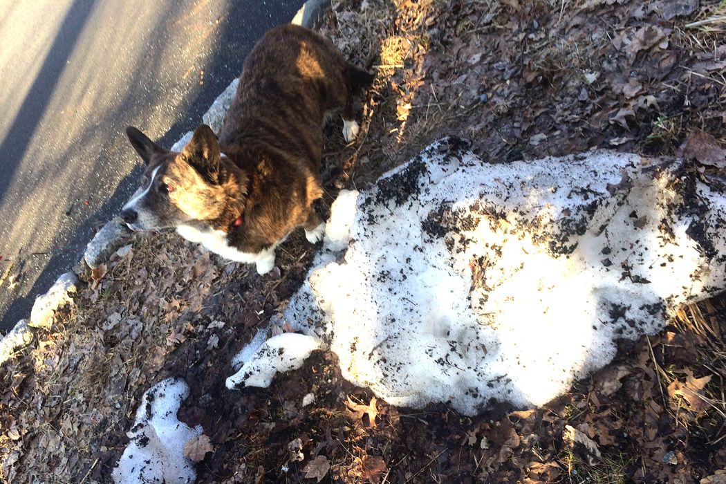 Oops! the last sign of winter - Dyna by the last bits of dirty snow - pushed there weeks ago by the snowplow.