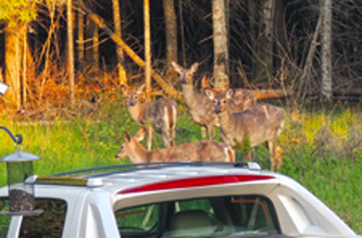Why are they all watching my truck? - or - are they watching me? They are fun to see anyway.