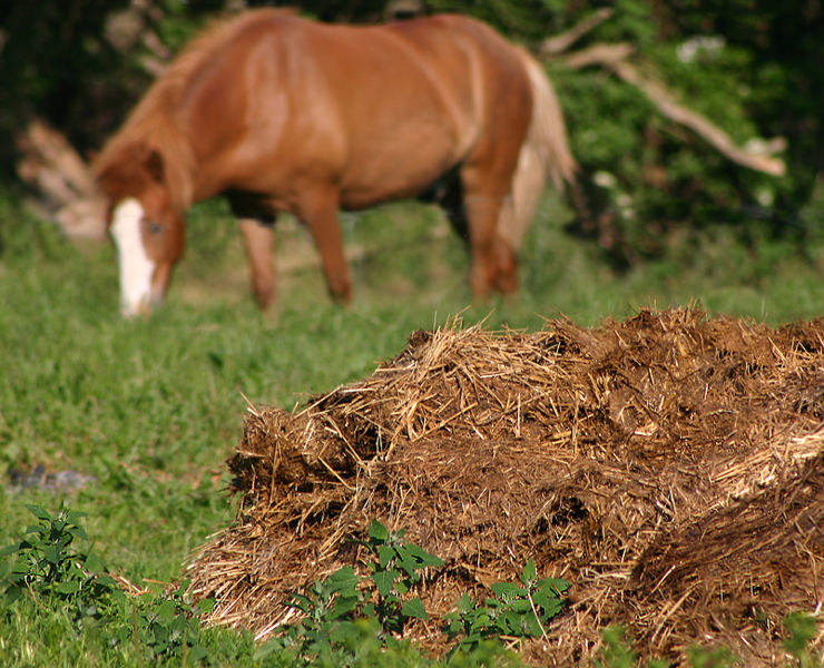 According to the internet questions.com The average horse produces 9 tons (8.16 metric tonnes) of manure every year. A 1,000 pound (454.55 kilos) horse will deposit approximately 35 pounds (15.91 kilos) of manure daily plus 6-10 gallons (27.3 - 45.5 litres) of urine. Soiled bedding  adds another 15-20 pounds (6.82 - 9.09 kilos) of waste daily.  A horse produces about 9 tons (8.16 metric tonnes) of manure per year and 3.5 tons (3.18 metric tonnes) of urine.