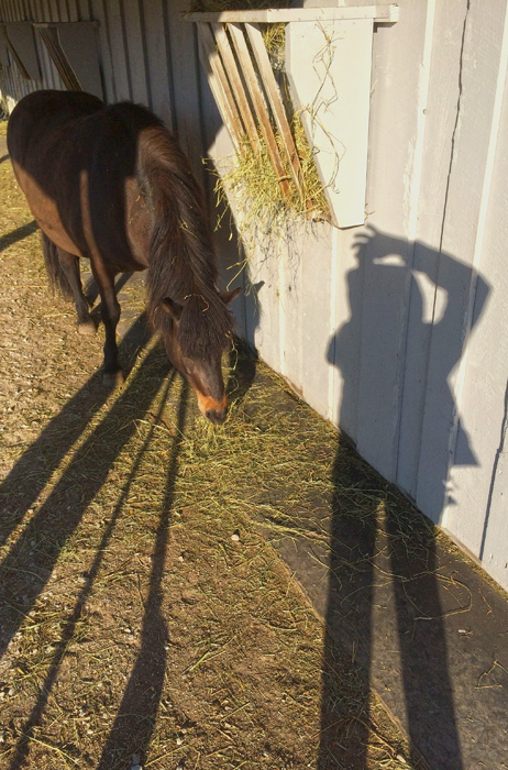 Breakfast with the horses - - a selfie via an early morning shadow