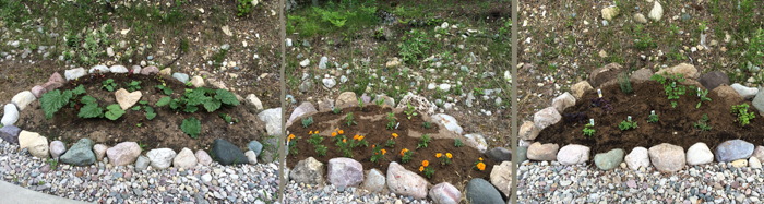 Here are three photos of my three mostly herb gardens - no fence - the deer will be able to at the herbs all natural - folks tell my the are tempted to eat herbs - We will see - i will keep you informed!
