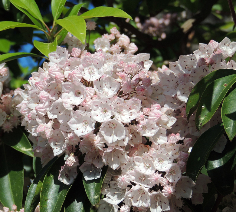 Bet you could find some Lilac's where ever you are - They are like America's Flower - every where and if you find one - Go sniff it -- WOW