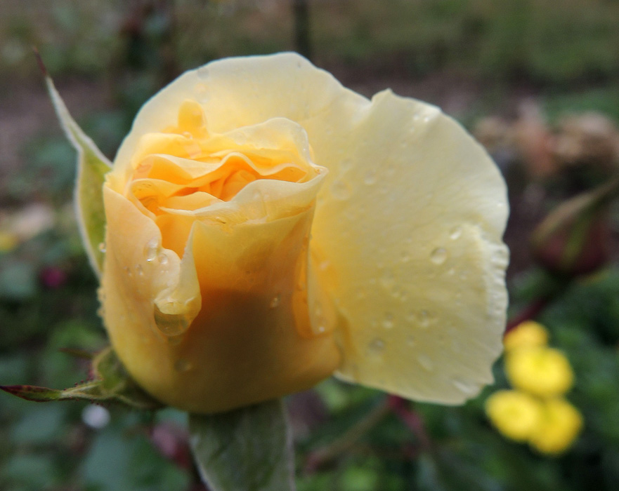 I will sent to you all a digital rose - why?  Because you took the time ti view my blog - Thanks.
