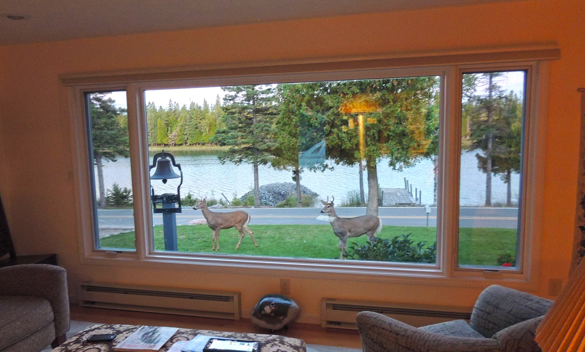 """I looked out the window and what did I see?  Deer,  water, bell -- well, yes but that is not the story I wanted to tell you. I wanted to tell you of """"V"""" for victory, lets eat breakfast at these minnow traps, bunch up, head for the other shore."""