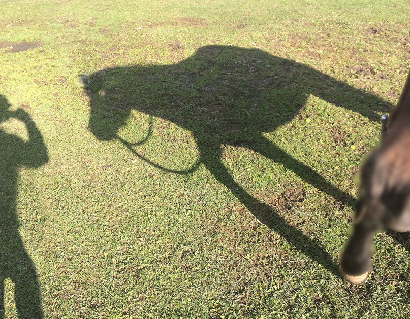 """While trying to decide what to do with no bridles I decided to be a photographer and capture me and Perla as a shadow - a shadow. Our ex-president said """"I've often said there's nothing better for the inside of a man than the outside of a horse."""" Ronald Reagan -- That was a little deep, but Daniel Boone made straight talk  """" All you need for happiness is a good gun, a good horse, and a good wife."""""""